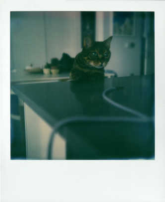 impossible-project-announces-project-8-k.jpg