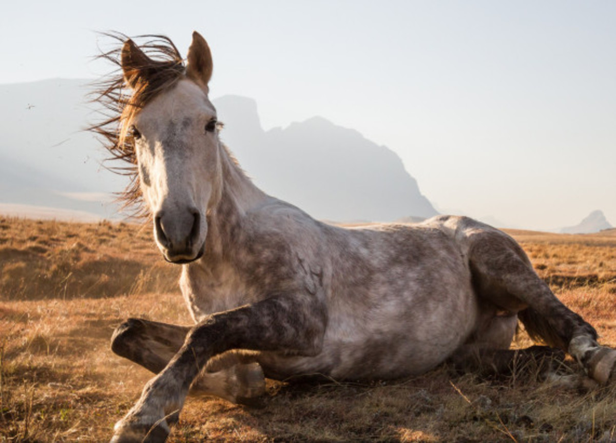national-geographic-traveler-2014-photography-contest-winners-04