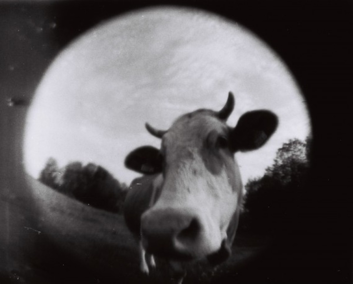 lomography-fisheye-baby-110-camera-03