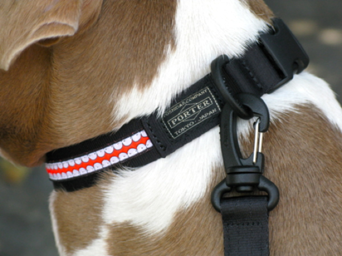 originalfake-collar-and-leash-1
