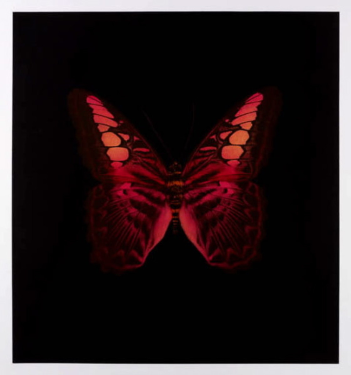 damien-hirst-butterfly-memento